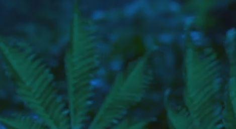 junglevibes
